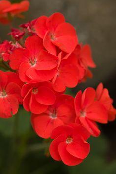 the red garden .. X ღɱɧღ   