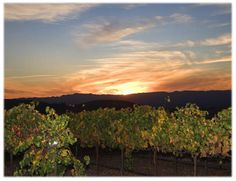 beautiful vineyard views at sunset abound at Carriage Vineyards Inn in the Paso Robles Wine Country