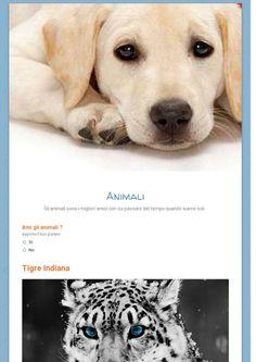 Sondagggio sui animali