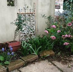今日のお庭   My garden    今日もお疲れさまです()ノ    月に入ってからお庭がかなり活気が出てきました    キラキラしたこの季節が大好きです    クリスマスローズの左側はブルーのシラーの群生です    もう少しで咲いてくれそうです    #クリスマスローズ#花#はなまっぷ#ムスカリ#花のある暮らし#暮らしを楽しむ#日々#日々のコト#ナチュラル#庭作り#庭#ガーデン#ガーデニング#4月#私の庭#garden#flowers#naturalgarden#natural#life#spring#April#beautiful#good job by clalisnao
