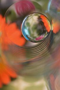 Photograph - Floral Sphere by Heidi Westum