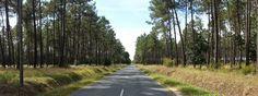 80km de route de ce genre dans les Landes