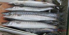 Philippine Fish Species - List of Common Fish in the Philippines Animals Name In English, Goldfish Types, Restaurant Fish, Fish Chart, Oscar Fish, Fish List, Live Aquarium Fish, Animal Worksheets, Fish Stock