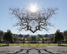 Mirrors – La nature symétrique de Traci Griffin