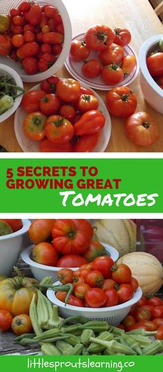 Tomatoes are one of the most popular vegetables grown. Growing great tomatoes at home is a passion and an art, but it's not that hard to learn how.