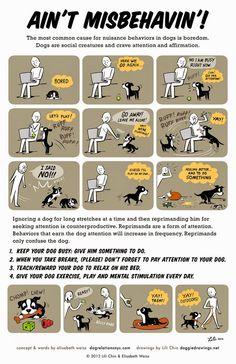 Training ~ Tenacious Little Terrier