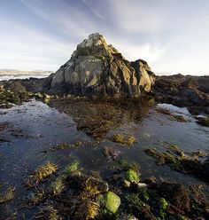 Tidepools filled with wildlife in Cayucos, CA