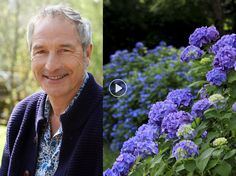 """Paniculata, macrophylla, quercifolia … Troublesome to seek out amongst all these kinds of Hydrangea. Stéphane Marie, the star gardener of """"Silence … Hydrangea, Outdoor Gardens, Garden Online, Poisonous Plants, Luxury Garden, Potager Garden, Plants, Planting Flowers, Organic Gardening"""