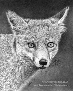 Limited Edition Giclee Fine Art Print - Fox Portrait Pencil Drawing by Jill…