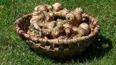Egy zsírégető, bőrszépítő zöldség, mely beindítja a fogyásodat Garden Sculpture, Stuffed Mushrooms, Vegetables, Food, Health, Stuff Mushrooms, Essen, Vegetable Recipes, Meals