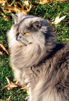 Thelma, la Gata más bella y buena del Universo- Mi Reina