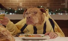 Daily Cute: Dogs and Cats Sit Down for a Hilarious Holiday Feast-video