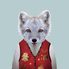 Artic fox - Zoo Portraits/Yago Partal