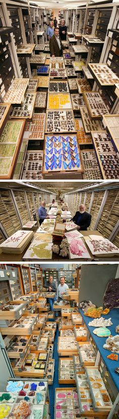 Explore the Vast Scientific Collections of D.C.'s National Museum of Natural History Paired with Respective Experts