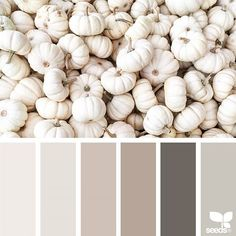 today's inspiration image for { harvest tones } is by @suertj ... thank you, Sue, for another incrediblel #SeedsColor image share!