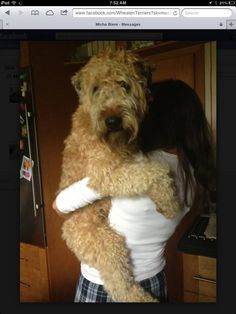 Wheaten Terriers they all must be the same