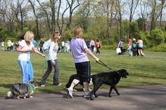 Grab a leash and be part of Canine Companions DogFest Walk 'n Roll! It's a community dog walk that supports the mission of Canine Companions for Independence. Register just yourself, or put together a group of friends, family members or coworkers and walk as a team. Then fundraise. Your fundraising efforts will transform the…