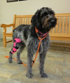 Knee Braces for Dogs | Stifle Braces for Dogs | Canine Stifle Brace | MyPetsBrace.com