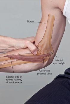 Human Body Anatomy, Yoga Anatomy, Human Anatomy And Physiology, Muscle Anatomy, Hand Therapy, Massage Therapy, Physical Therapy, Medicine Notes, Lymphatic Drainage Massage