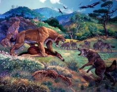 sabertooth lions vs. direwolves