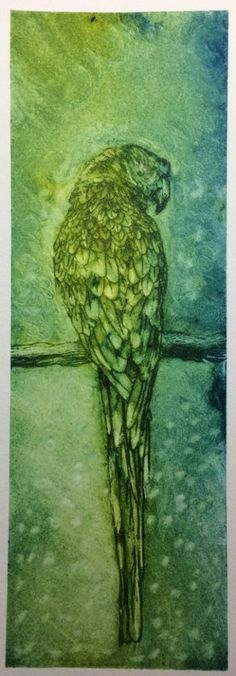 Etching of a parrot by Janet Plantinga