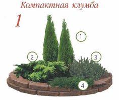 Клумбы с хвойными растениями | Дачный сад и огород