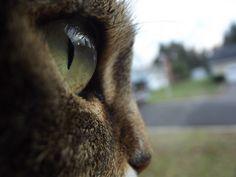 Cat eye's