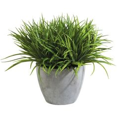 Ethan Allen Grass in Aged Gray Pot (295 CAD) ❤ liked on Polyvore featuring home, home decor, floral decor, fillers, plants, fillers - plants, & - fillers - plant, distressed home decor, grey home decor and gray home decor
