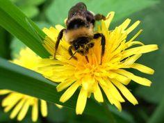 bumble-bee-crop.jpg