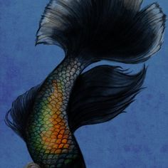 'Betta Splendens' by LittlestFinch Betta, All Art, Creatures, Photoshop, Animals, Animales, Animaux, Betta Fish, Animal