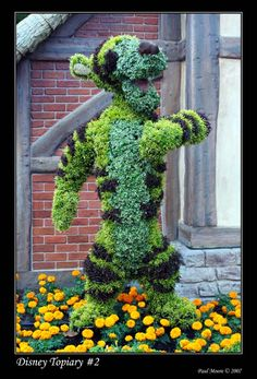 Tigger shrub by the front steps! I will have one of these some day!
