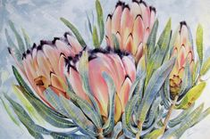 #Protea #Western Cape #Cape Town Oil painting by Ellie Eburne, 'Awesome Foursome'