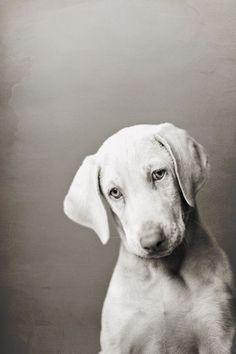 Sweet dog---