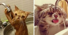 14+ Crazy Cats That Actually Love Water | Bored Panda