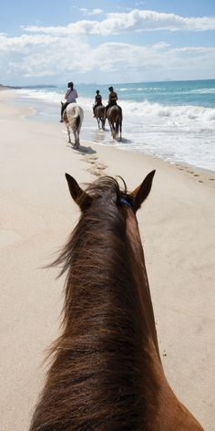 Horse riding along Pakiri Beach, North Island, New Zealand You are in the right place about Horse Riding Photography amazing photos Here we offer you the m Cute Horses, Pretty Horses, Horse Love, Beautiful Horses, Beautiful Beach, Crazy Horse, Cavalo Wallpaper, Horse Riding Gear, Trail Riding