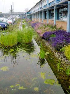 Bioswale / Rainwater is diverted into vegetation that takes up the excess water. Outdoor Rooms, Outdoor Gardens, Landscape Architecture, Landscape Design, Sponge City, City Rain, Garden Projects, Garden Ideas, Rain Garden