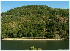 https://flic.kr/p/ax4T3q | Douro 25-06-11 | Automotora Diesel série 592, comboio regional Porto -> Régua