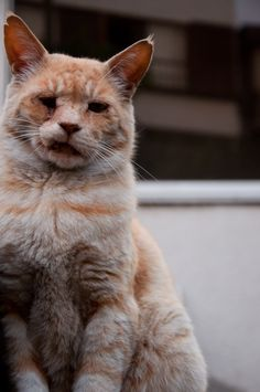 猫 | by ankimo_ymd