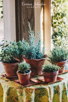 ALL you need to know for an easy indoor herb garden and practical ways to use your herbs in the kitchen and beyond. These 10 tips are going to ensure you'll have indoor herb success whether you have a green or black thumb! Air Plants, Indoor Plants, Indoor Herbs, Cactus Plants, Garden Planters, Planting Succulents, Potted Garden, Hanging Herbs, Hanging Planters