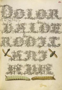 Joris Hoefnagel, illuminator [Flemish / Hungarian, 1542 - 1600] and Georg Bocskay, scribe [Hungarian, died 1575]