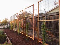 Trellises are a useful and beautiful addition to any garden space. Come learn how easy it is to build a trellis, including two simple inexpensive designs. Privacy Trellis, Wire Trellis, Grape Trellis, Trellis Fence, Privacy Plants, Privacy Walls, Wire Fence, Metal Garden Trellis, Garden Fencing
