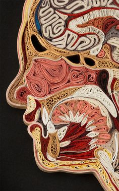 """Anatomical """"quilling"""" cross-section paper illustrations by Lisa Nilsson"""