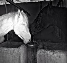 Blanco y negro. White and black. #diariodeuninstagramer