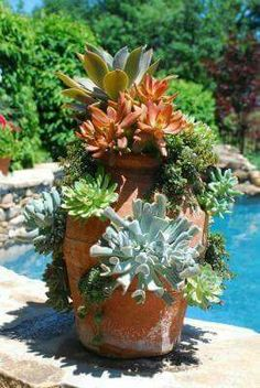 Hens n chicks with color infused succlents in terra cotta planter.