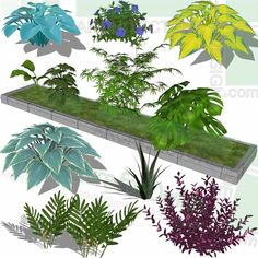 A collection of small plants as SketchUp 3D models. Free download! Small Plants, Small Trees, Cat Nail Designs, Plant Sketches, Sketchup Model, Minimalist Drawing, Playground Design, Landscape Architecture Design, Parking Design