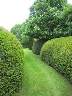 Garden Hedge - Patrick Verbruggen