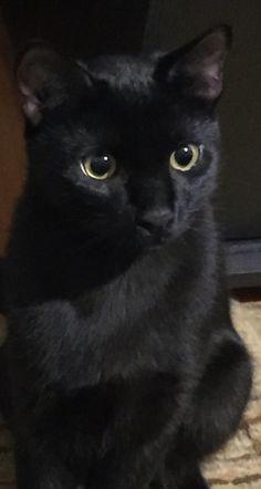 Black Cats & Co ♥