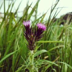 #flower #power #flowerpower #pink #garden #spine #rose #grass #fili #erba #country #farm #freedom #aria #pura #nature #instanature #focus #together #two #twice #ricardo #tronconi #eroticnovel #novellaorchidea #novella #orchidea #raccontierotici #racconti