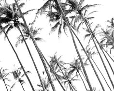 High Contrast Black and White photography used as the first layer for mixed media Photography Art. Travel Inspiration | Photography Inspiration