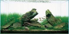 Blessings Aquarium Shoppe – The Art Of Aquascaping